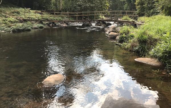 滝周辺は自然に溢れ、川の水も澄んでいて綺麗