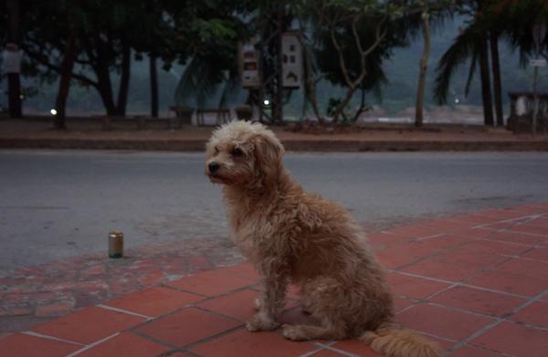 宿の看板犬