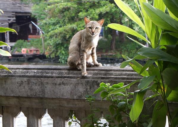 市場近くにいた猫