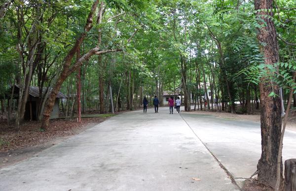 鬱蒼とした林の中を歩く